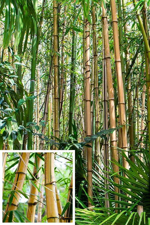 Material für nachhaltige Werbemittel: Bambus